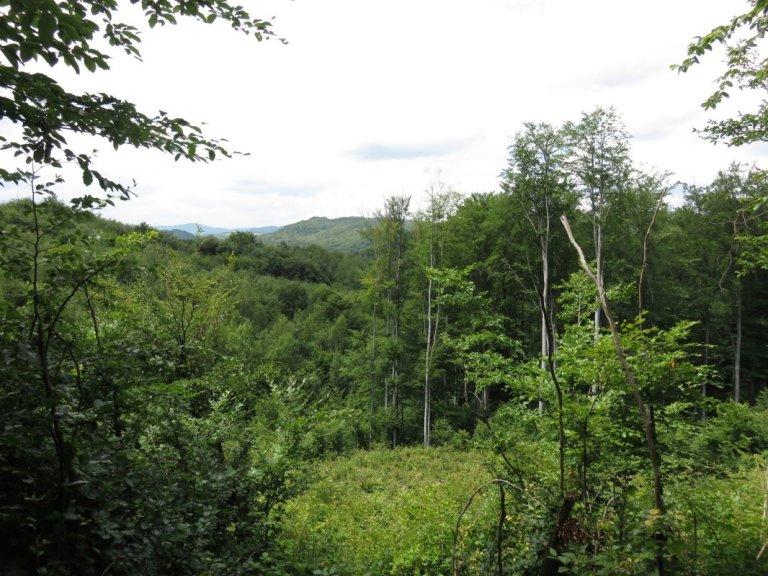 Carpathian Forest View