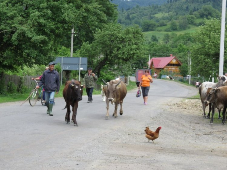 Rush hour in the Ukraine