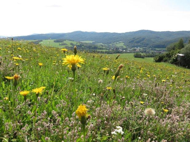 Carpathian hill pasture