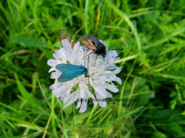Bugs on aflower
