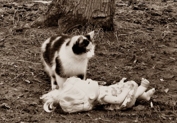 Feral cat and doll