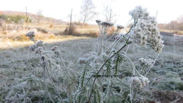 Hallowe'en and first frost